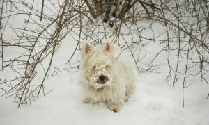Reilly the Snow Dog 2